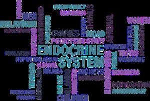 Endocrine-System-Hormones